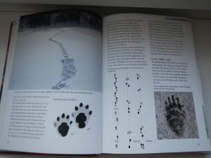 Buch Tierspuren