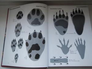 Tierspuren Buch Überbick