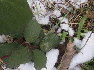 Survival Pflanzen Nahrung Winter