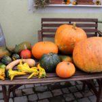 Selbstversorger-Basiskurs - Gemüse am Tisch