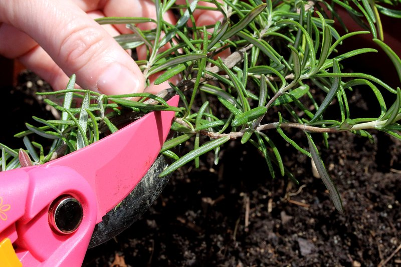 Spezialkurs Pflanzen vermehren