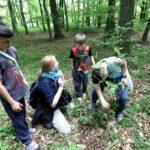 Kinder-Kräuter-Tag: Gruppe Kinder untersucht Pflanzen im Wald